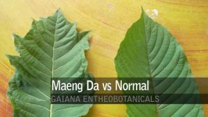 Maend Da vs Normal Kratom
