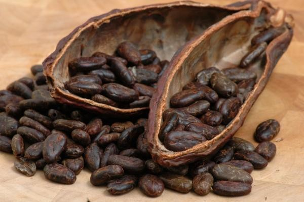 Potential benefits of Cocoa extract