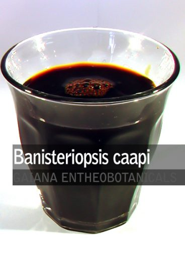 banisteriopsis-caapi-extract