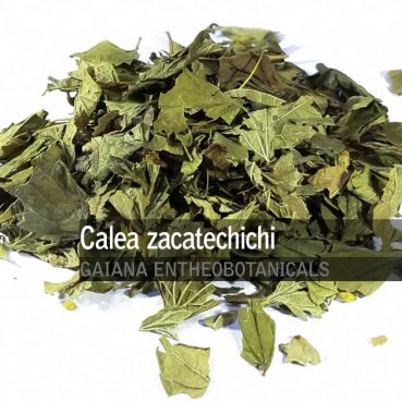 Calea-zacatechichi-Dream-Herb