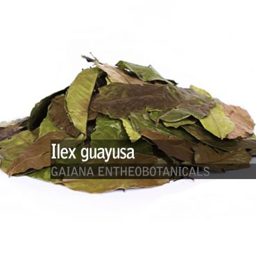 Ilex-guayusa-leaves
