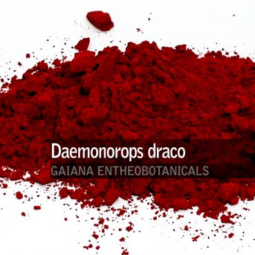 Daemonorops draco -Dragons Blood-