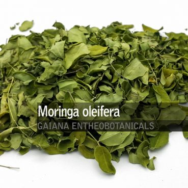 Moringa oleifera -Leaves-