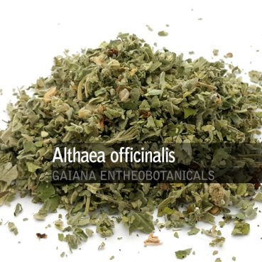 Althaea officinalis -Marshmallow-