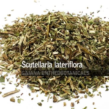 Scutellaria lateriflora -Scullcap-