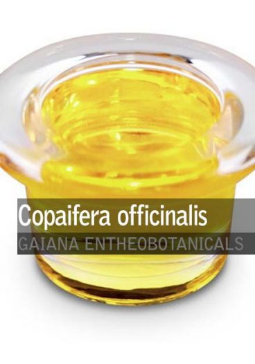 Copaifera-officinalis-copaiba-oil