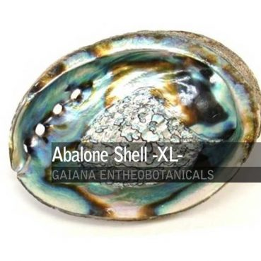 Abalone-Shell-XL