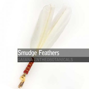 Smudge-Feathers-Swan